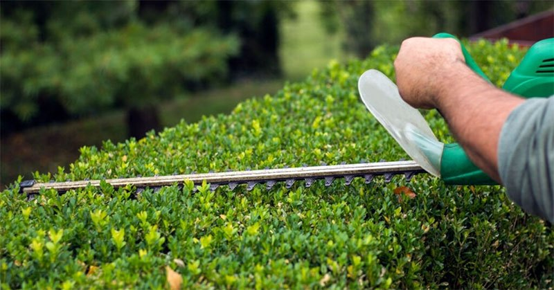 Best Small Hand Held Hedge Trimmer